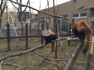 週末のお出掛けは年間パスポートが1,000円の動物園で遊び倒す!