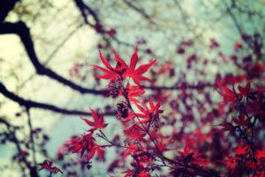 乾燥対策してますか?秋の乾燥は体の中と外からの水分補給が鉄板です!